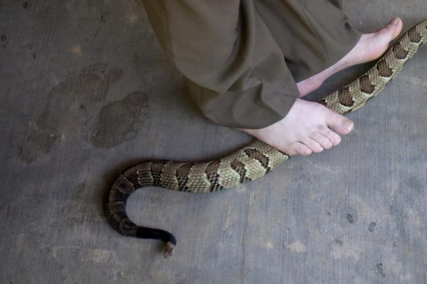Color Image of a Serpent Under A Person's Feet